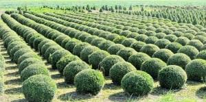 PEI agricoltura innovativa lombardia