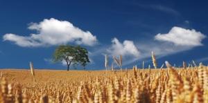 agricoltura sociale cariplo